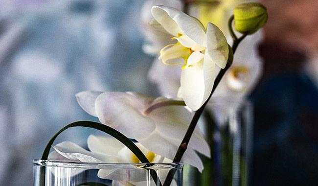 Messedekoration mit Blumen